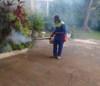 Fumigation services